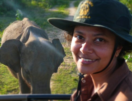 Shermin de Silva is Helping Save the Asian Elephant